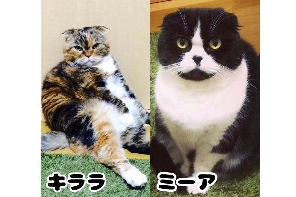 飼い猫画像2匹