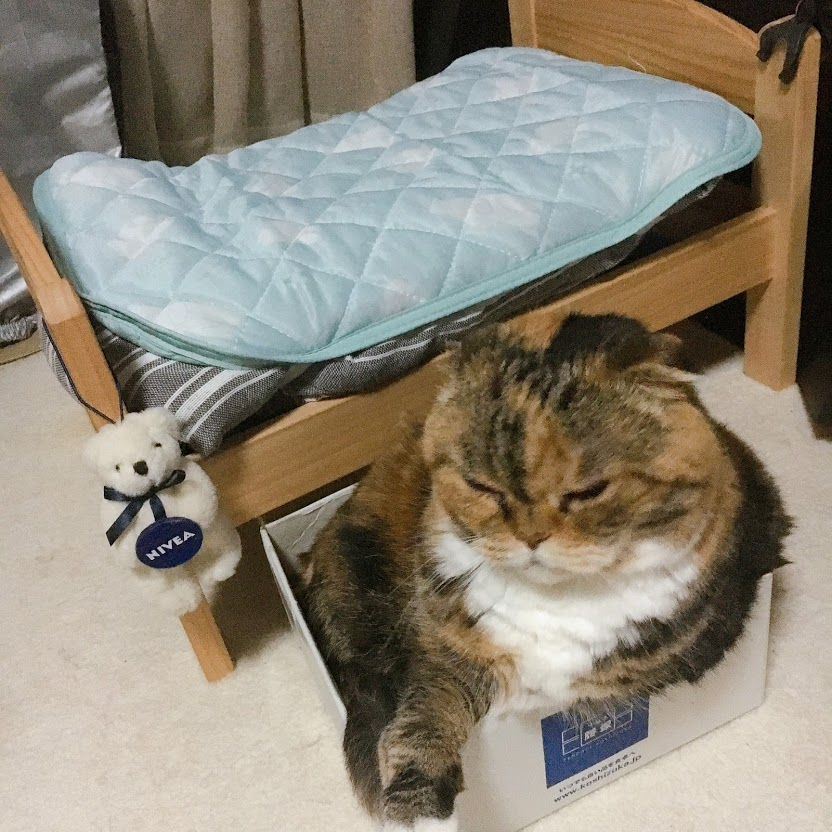 キラちゃんベッドの前で箱入り娘